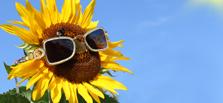 Vorteile Sonnenstrom